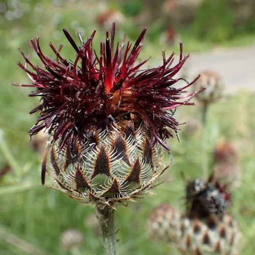 Journée des plantes rares au Chateau de la ferté (71)